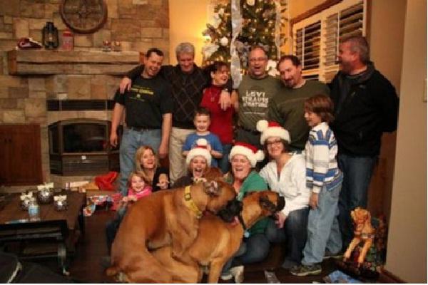 Tis' The Season To Be Merry!-Dog Photo Bomb