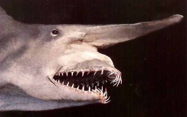 Goblin Shark-Horrible Deep Sea Creatures