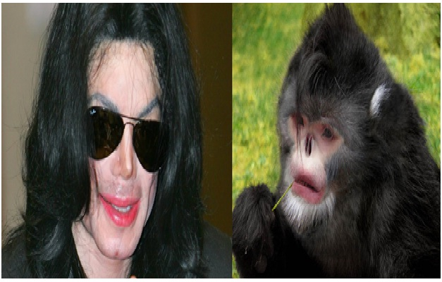 Michael Jackson - Black Snub-Nosed Monkey-15 Celebrities Who Look Like Real Life Animals