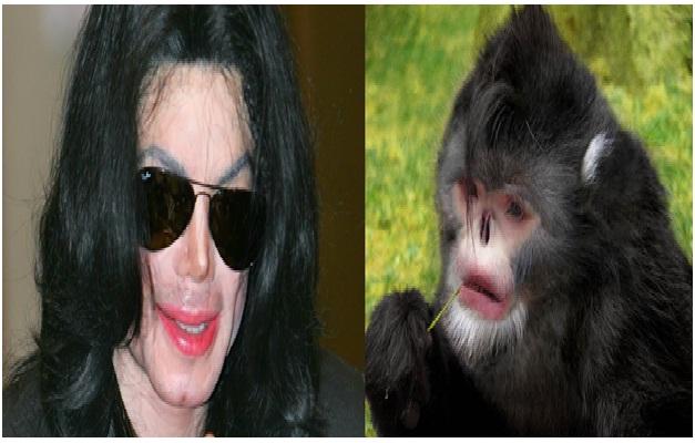 michael jackson   black snub nosed monkey celebrities who