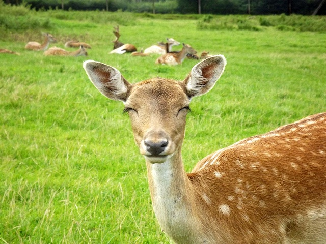 Biting Deer-Most Ridiculous Excuses For Calling In Sick