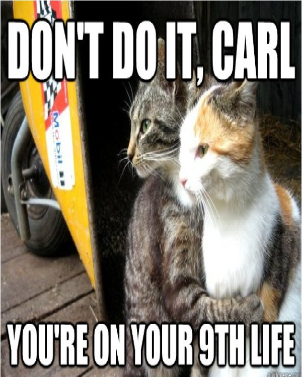The protector-Funniest Cat Memes Of All Time