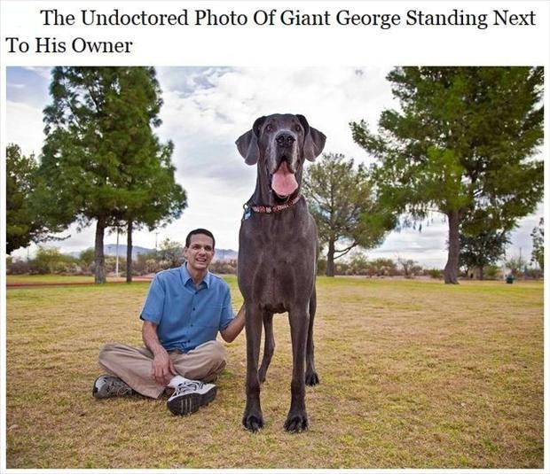 What a dog-Photos You Won't Believe Are Not Photoshopped