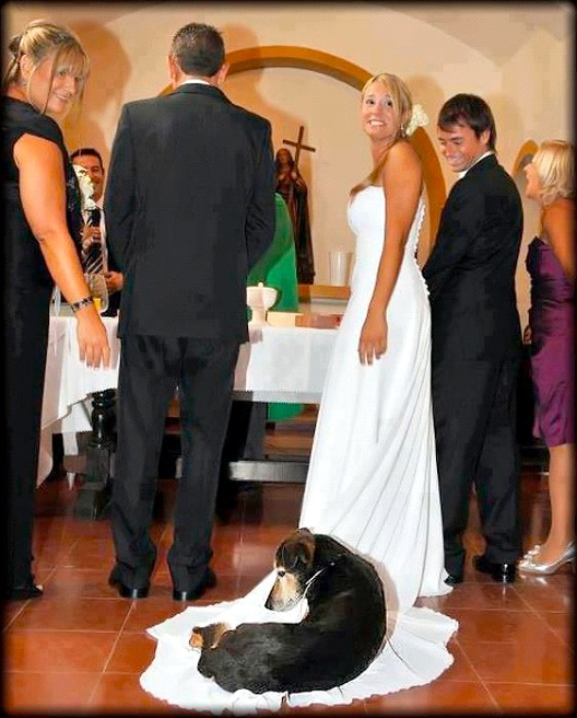 Dog Of Honor-Best Wedding Photo Bomb