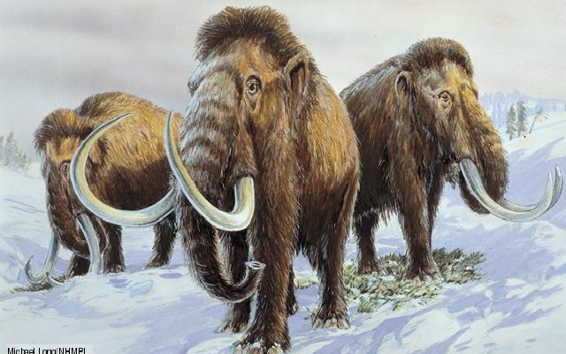 Wooly Mammoth-Extinct Animals That Science Could Bring Back From The Dead