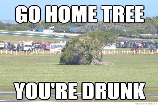 Fallen Tree-Best Go Home, You're Drunk Memes