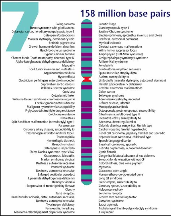 Chromosome 7-Video Game Trivia