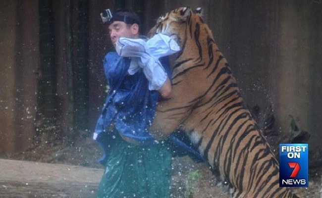 Australian Man Mauled by a Tiger-Shocking Moments Caught On Camera