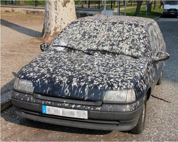 Bird Poop-Worst Superstitions Around The World