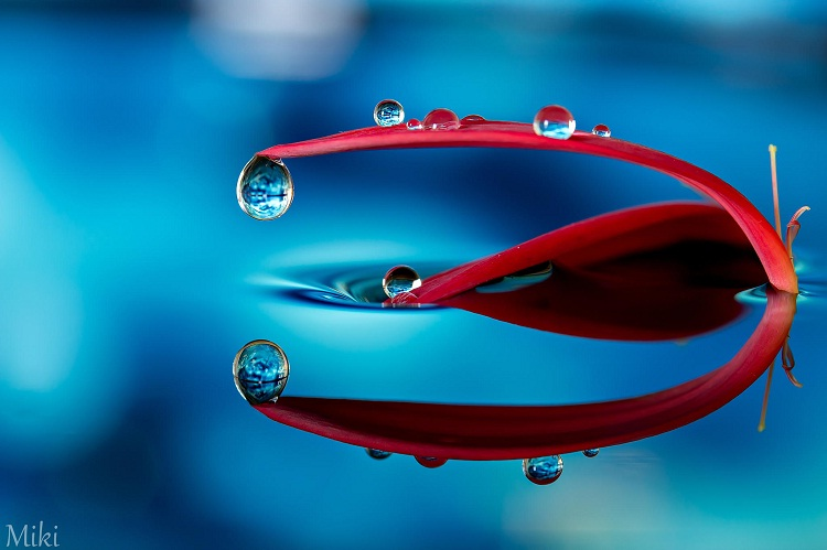 Bold-Amazing Water Droplet Photography By Miki Asai