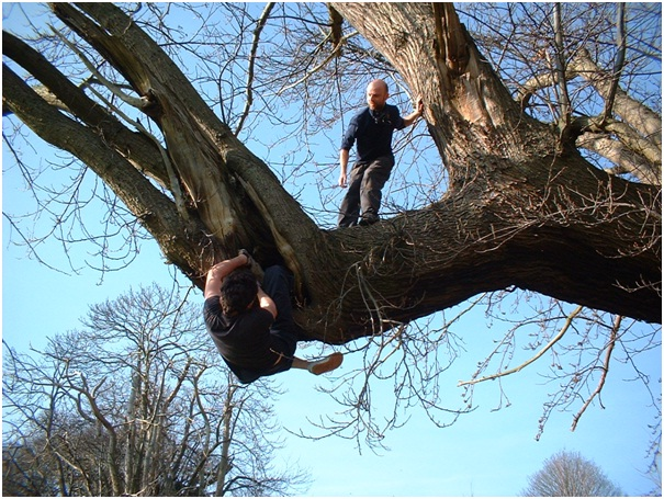 Tree Climbing Course-Bizarre College Courses