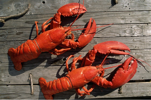 Lobster-Most Consumed Sea Foods