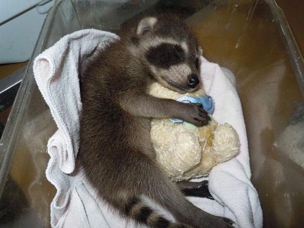 Awwww-Baby Animals With Stuffed Toys