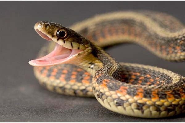 Snake - Introvert, Intuitive, Thinking, Judging-Know What Animal You Are Through Personality Test