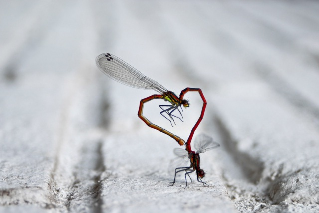 Love fly-Amazing Perfectly Timed Photos Of Animals