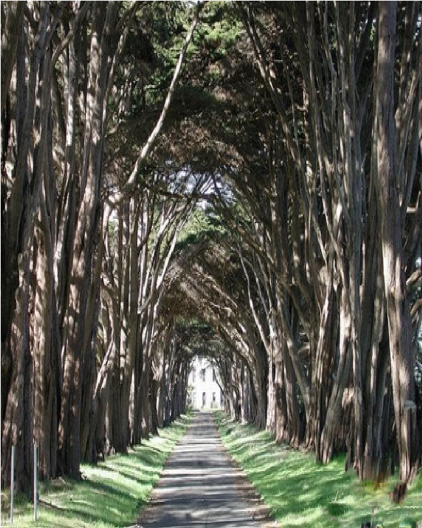 Tunnel Vision Trees-Amazing Trees