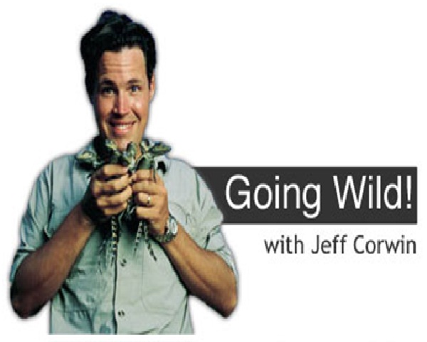Going Wild with Jeff Corwin-Disney Shows That We Wish Would Come Back.