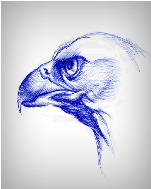 Eagle-Amazing Pen Drawings