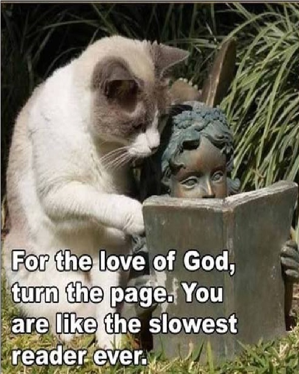 The reader-Funniest Cat Memes Of All Time