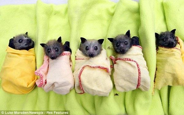 Bats-Adorable Baby Animals