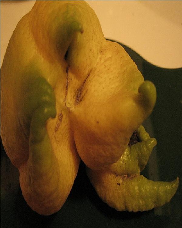 Strange Lemon-Top 15 Weirdest Shaped Fruits/vegetables