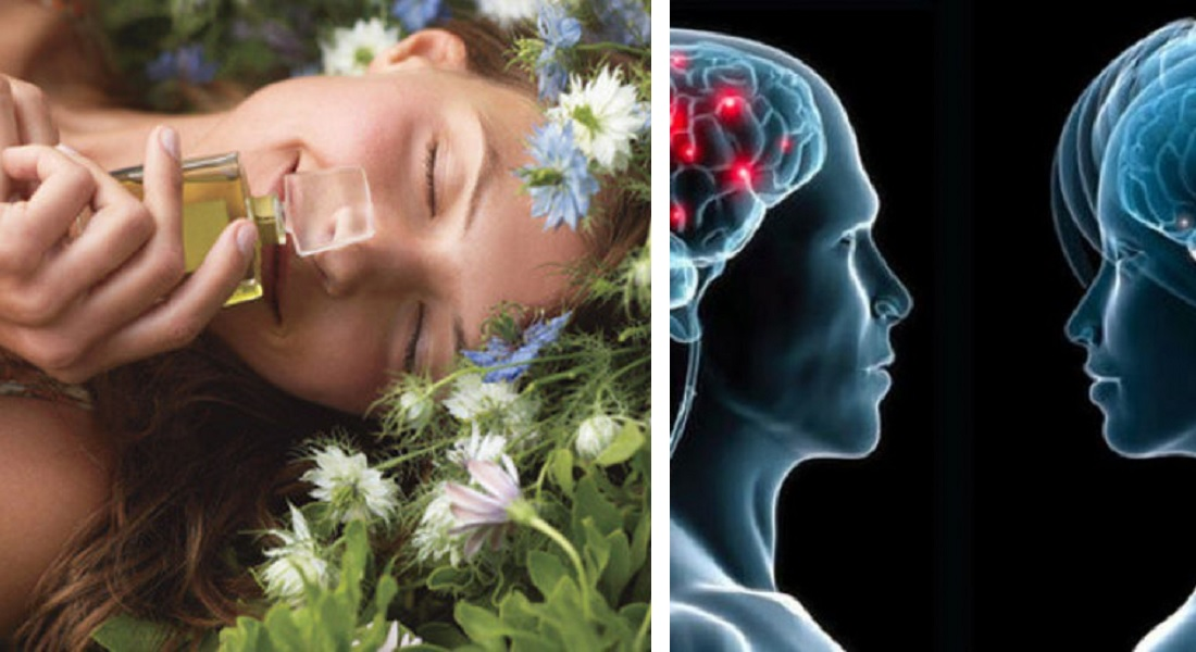 15 WTFacts About Brain You May Not Know