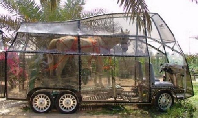 Clear Horse Box-Top 15 Weirdest Cars