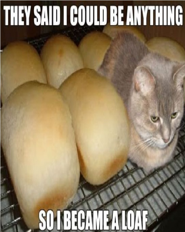 Loaf Cat-Funniest Cat Memes Of All Time