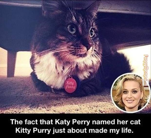 That is one cool fact-23 Hilarious Katy Perry Memes Ever Made