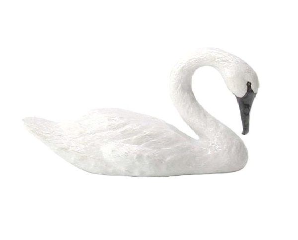 Swan - Introvert, Intuitive, Feeling, Perceiving (INFP)-Know What Animal You Are Through Personality Test