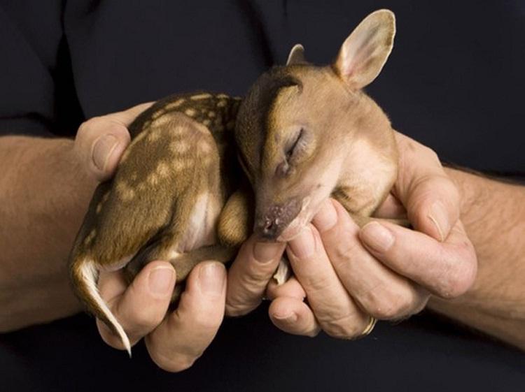 Deer-Adorable Baby Animals