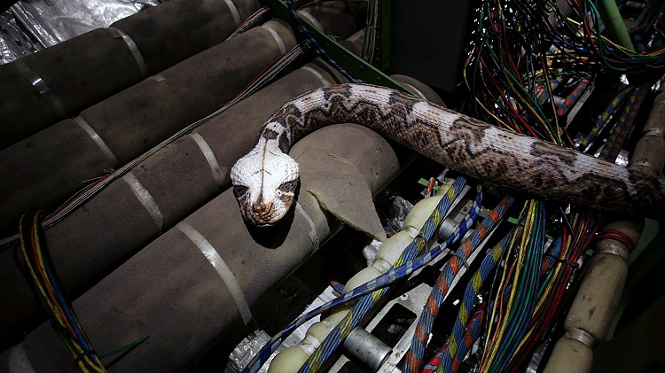 Escaping Snake-Craziest Things Found By Airport Security