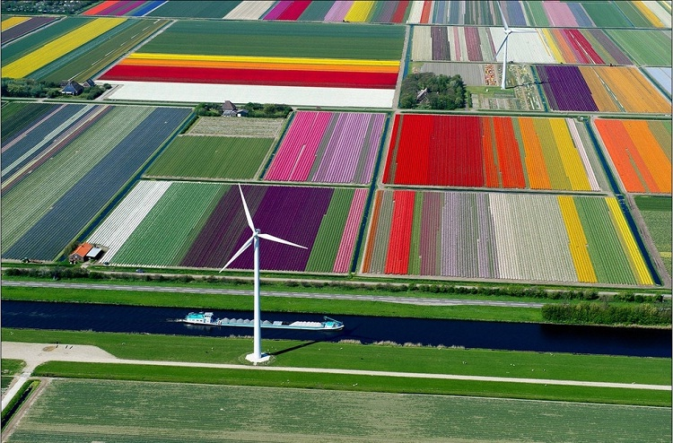 Tulip fields, Netherlands-How Our World Appears To A Bird