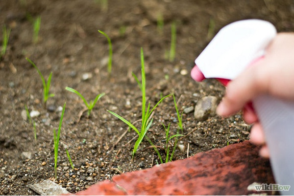 Got Weeds?-Amazing Life Hacks You Should Know