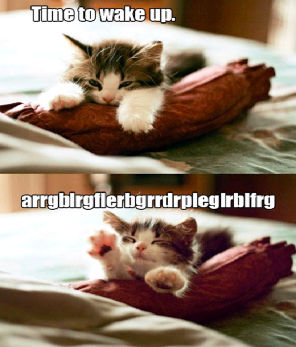 Kitten-Cute Wake Up Messages