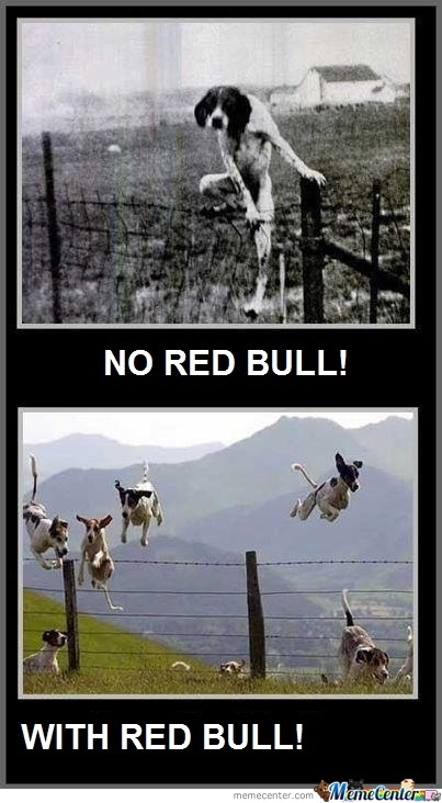 The difference to dogs-Best Red Bull Memes