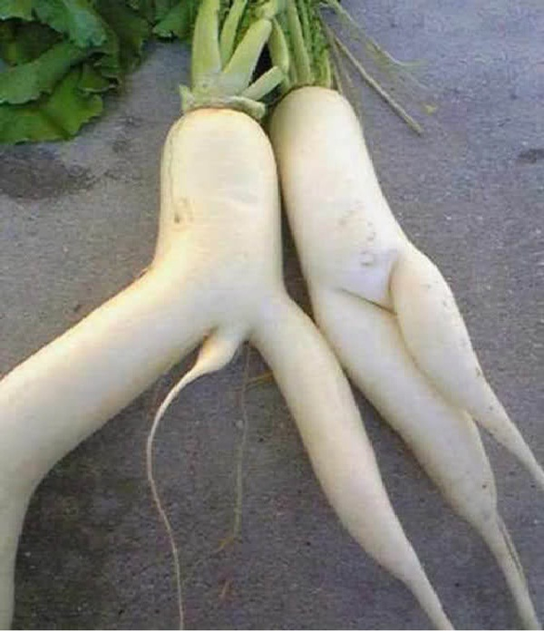 Raunchy Turnips-15 Pictures That Tell If You Have A Dirty Mind