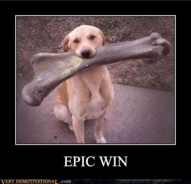"""Good dog-Hilarious """"win"""" Photos"""