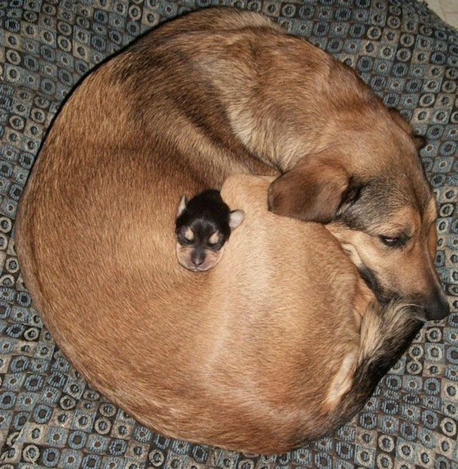 Mummy Love-Amazing Pics Of Animals Pillowing Each Other