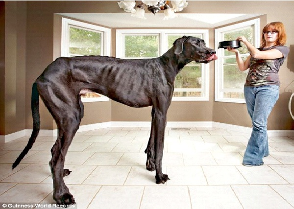 Worlds Biggest Pets-9599