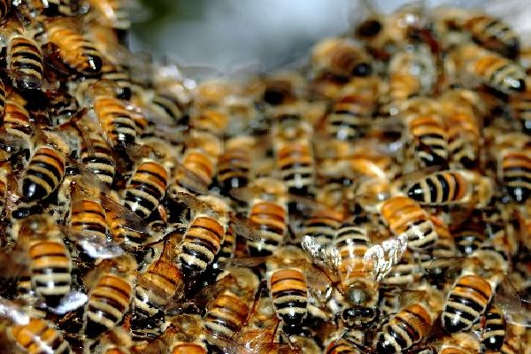 Respectful bees-Crazy Stories Which Are Real