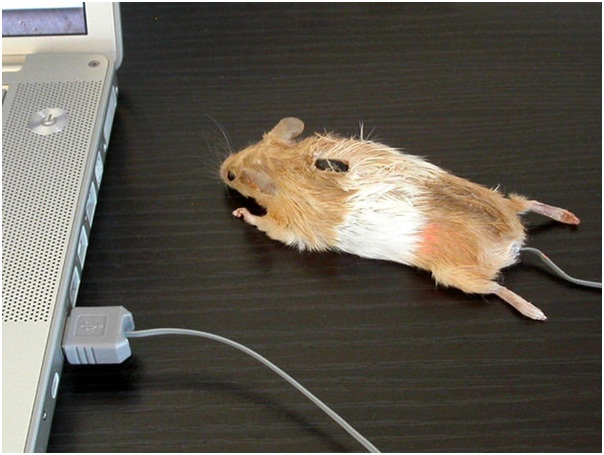 The Mouse Mouse-Amazing Computer Mice