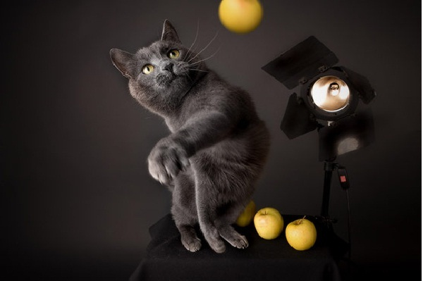 Diva Cat-Amazing Perfectly Timed Photos Of Animals