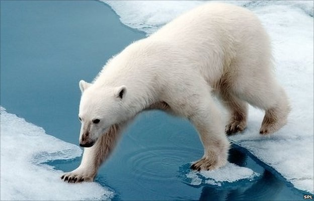 Polar bears-Weird Facts About Animals