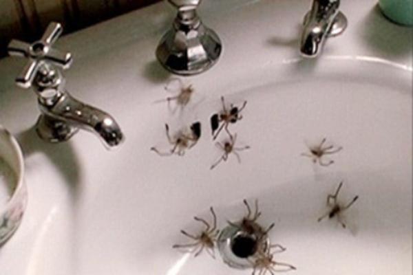Arachnoph0bia-Most Common Phobias