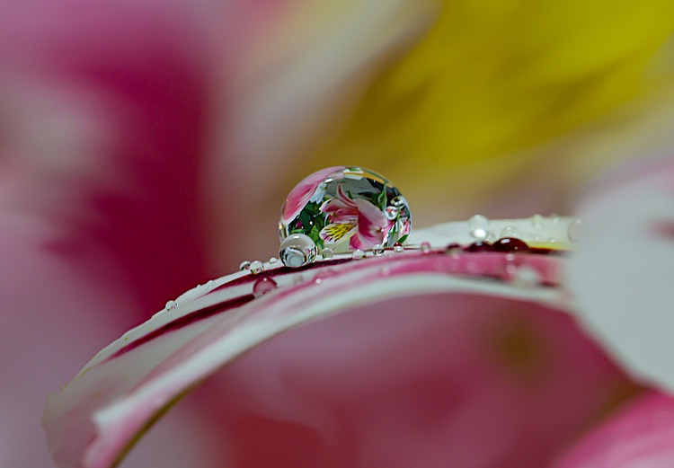 Enchanting-Amazing Water Droplet Photography By Miki Asai