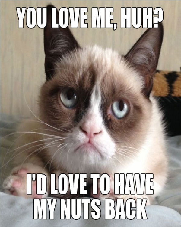 Cats nuts-Funniest Cat Memes Of All Time