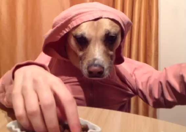 Dog with human hands-Awesome Vines 6 Second Videos
