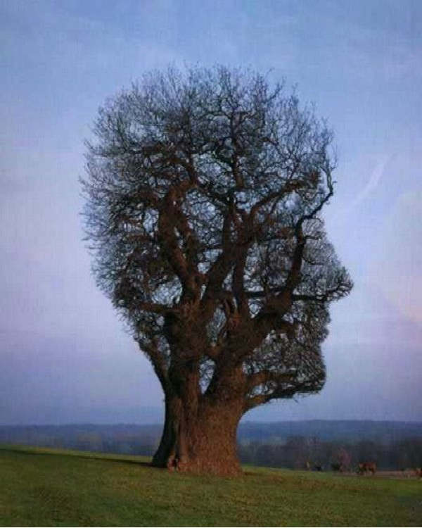 Side Profile Tree-Amazing Trees