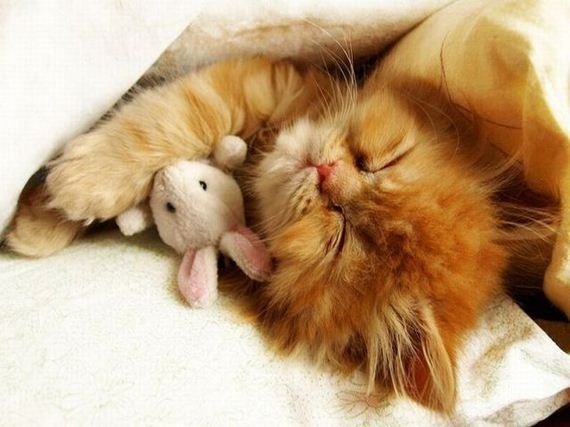 The kitten and the bunny-Baby Animals With Stuffed Toys